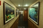 Liveaboards 10696865_sun_dancer_interior_hall640.jpg